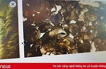 Facebook tiếp tay mua bán động vật quý ở Việt Nam