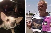 Người đàn ông gây sốc treo thưởng cả nhà cho ai tìm được chó cưng