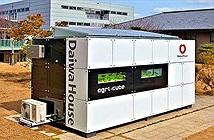 Agri-Cube - Container công nghệ giúp tăng năng suất trồng rau thủy sinh ở thành phố