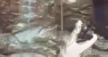 Video: Người đàn ông liều mình xuống giếng để cứu cá sấu