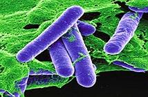 Vi khuẩn Clostridium botulinum: Nguyên nhân, triệu chứng và cách phòng ngừa
