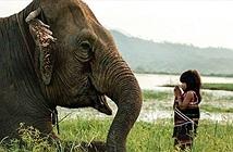 Báo Anh sửng sốt vì cô bé VN huấn luyện voi