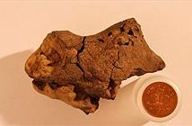 Viên đá lạ được xác định là hóa thạch não khủng long