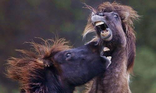 Ảnh động vật tuần: Ngựa quyết chiến trên đồng cỏ, thiên nga giữa mùa thu