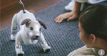 Liệu robot chó mèo có thể thay thế thú cưng thật sự?