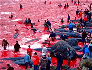 """Anonymous """"hạ"""" website chính phủ Iceland để cứu cá voi"""