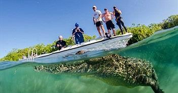 Rợn người nụ cười chết chóc của cá sấu khổng lồ