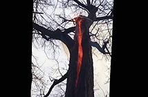 Kinh hãi cây bốc cháy ngùn ngụt từ trong thân
