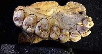 Phát hiện hóa thạch có thể viết lại lịch sử loài người