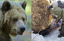 Thanh niên mất tích và bí mật rợn người trong hang gấu