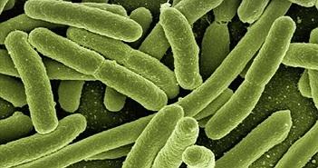 Thụy Điển lần đầu tiên thu được điện từ vi khuẩn