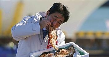 """Thủ tướng Nhật và bức ảnh """"chọn cá"""" sau thảm hoạ rò rỉ phóng xạ ở Fukushima"""