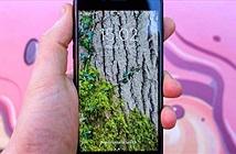 Đánh giá iPhone SE - chiếc iPhone xịn sò cho người eo hẹp túi tiền