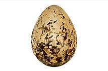 Trứng hiếm hơn 100 tuổi để quên trong ngăn kéo