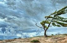 Chuyện gì sẽ xảy ra nếu gió ngừng thổi trên Trái Đất?
