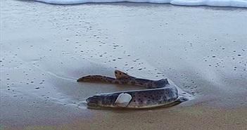 Kinh ngạc loài cá phát sáng trong tiểu thuyết viễn tưởng dạt bờ