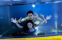 Nắng nóng, cặp vợ chồng nhảy luôn vào bể cá vì điều này