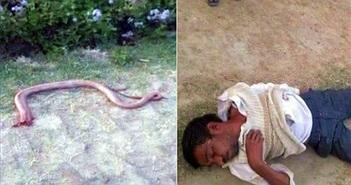 Bị rắn cắn, thanh niên cắn, nhai nát bét rắn cho... bõ tức