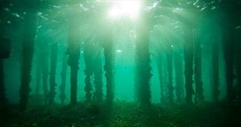 Khu rừng 10.000 năm tuổi chìm dưới đáy biển