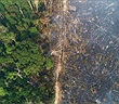 Hơn 10.000 loài có nguy cơ tuyệt chủng ở Amazon