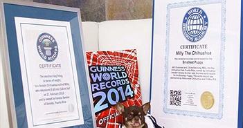 """Chó chihuahua lập kỷ lục nhân bản vô tính """"khủng"""" nhất"""