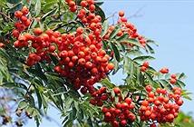Gần 60% loài cây đặc trưng của châu Âu có nguy cơ tuyệt chủng