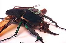 Vén màn bí mật về điệp viên côn trùng của Mỹ