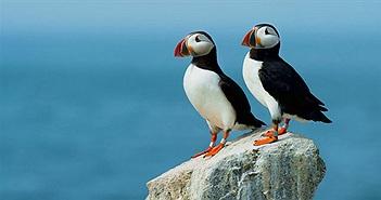 Lý giải được tại sao chim hải âu cổ rụt lại có chiếc mỏ lớn