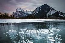 Chiêm ngưỡng hiện tượng sứa băng kỳ lạ ở Canada