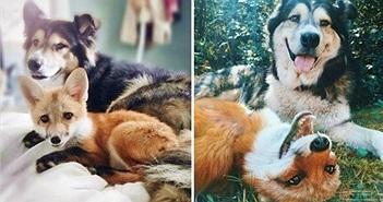 Ngưỡng mộ những tình bạn động vật đi cùng năm tháng