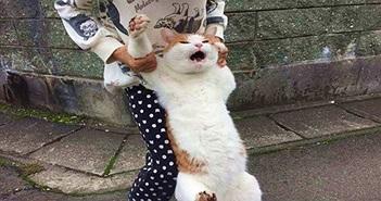 """Đáng yêu mèo bị bắt """"quả tang"""", mặt như hận cả thế giới"""