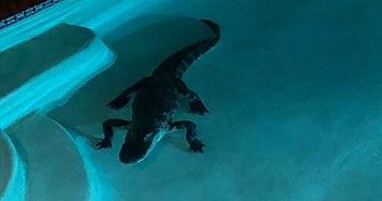 Tỉnh dậy nửa đêm, kinh hoàng phát hiện cá sấu trong bể bơi