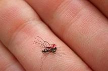 Một người Nhật bị chặn khỏi Twitter vì đập chết một con muỗi