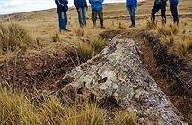 Phát hiện cây hóa thạch 10 triệu năm tuổi quý hiếm