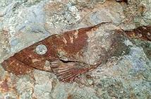 Phát hiện hóa thạch loài cá cổ đại chưa từng thấy ở Campuchia
