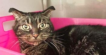 Kỳ tích của chú mèo bị bỏ rơi trong căn nhà khóa trái suốt 2 tháng