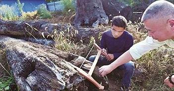 """Choáng váng khúc gỗ xấu xí bị vứt chỏng chơ """"hóa"""" kho báu hơn 60 tỷ"""